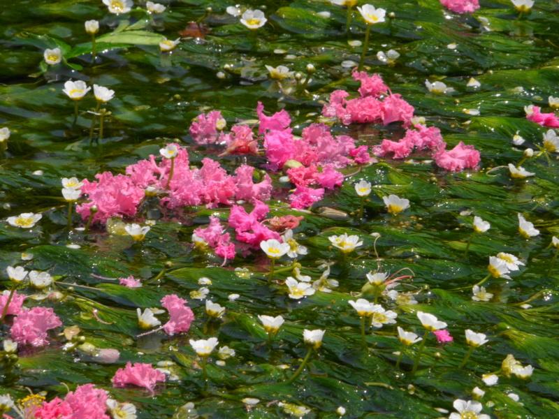 京都新聞写真コンテスト「水の中の妖精」