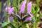 京都新聞写真コンテスト 花と蝶