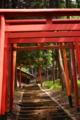 京都新聞写真コンテスト 下からのお参り