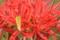 京都新聞写真コンテスト 花と虫