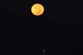 京都新聞写真コンテスト 中秋の名月