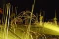 京都新聞写真コンテスト ライトアップ竹ドーム