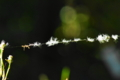 京都新聞写真コンテスト 蜘蛛の糸