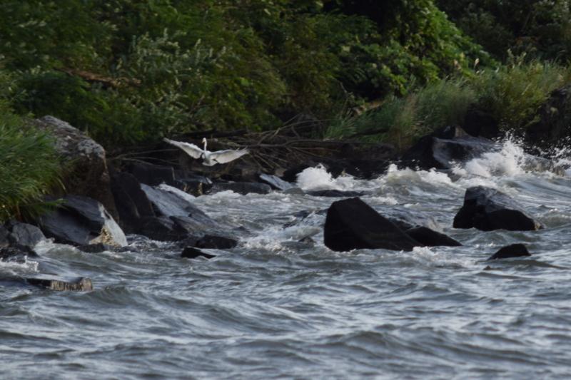 京都新聞写真コンテスト 波荒き着水できず