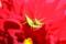 京都新聞写真コンテスト 花に抱かれて