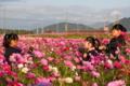 京都新聞写真コンテスト 青春