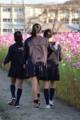 京都新聞写真コンテスト 仲良し散歩