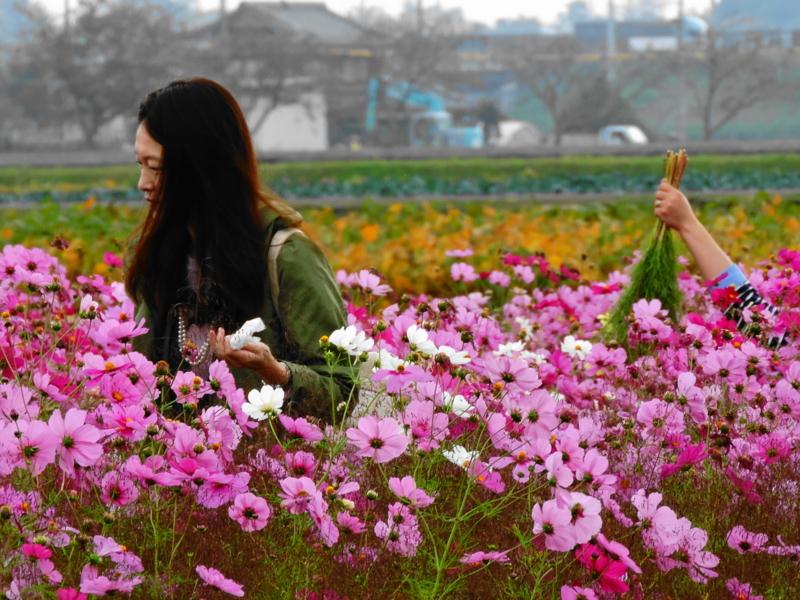 京都新聞写真コンテスト 手が出た