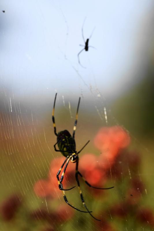 京都新聞写真コンテスト 逆さ蜘蛛