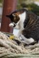京都新聞写真コンテスト 港の猫