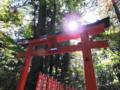 京都新聞写真コンテスト 日光に照らされて