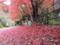 京都新聞写真コンテスト 雨に散る