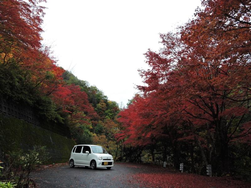 京都新聞写真コンテスト 車ともみじ