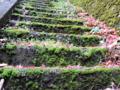 京都新聞写真コンテスト 苔の石段