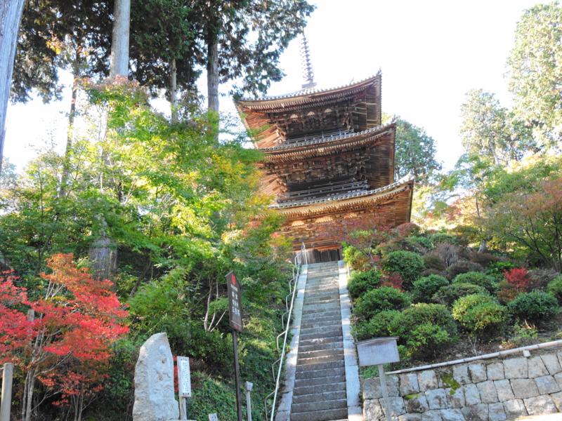 京都新聞写真コンテスト 力ずよく