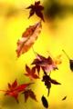 京都新聞写真コンテスト 蜘蛛の芸術
