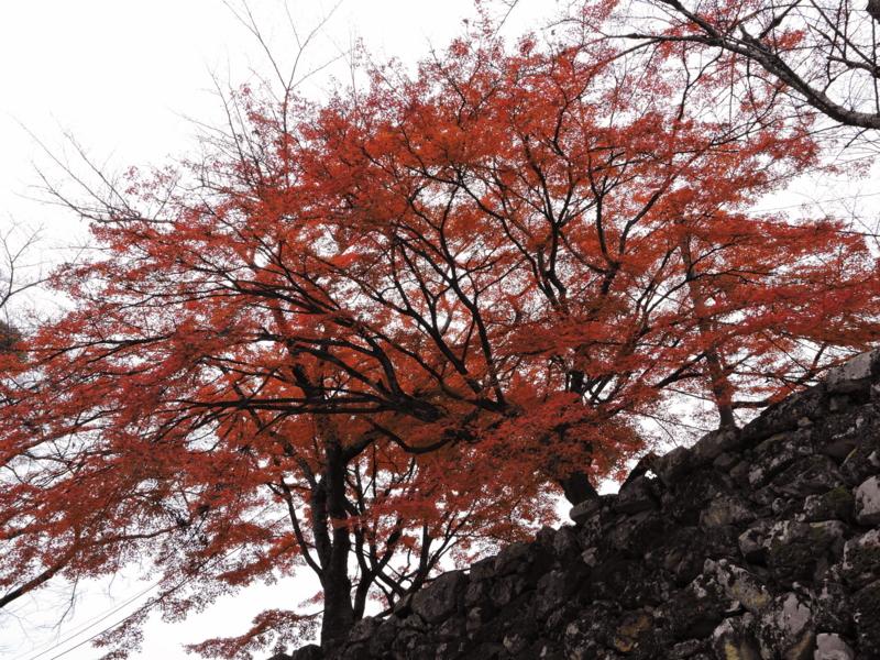 京都新聞写真コンテスト 高見の紅葉