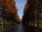 京都新聞写真コンテスト 静かなる並木