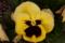 京都新聞写真コンテスト 髭の花