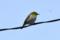 京都新聞写真コンテスト はぐれ鳥