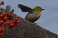 京都新聞写真コンテスト 一番鳥