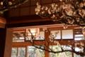 京都新聞写真コンテスト 欄間と梅花