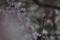 京都新聞写真コンテスト 霧の中の梅花