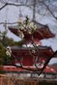京都新聞写真コンテスト 花の大覚寺