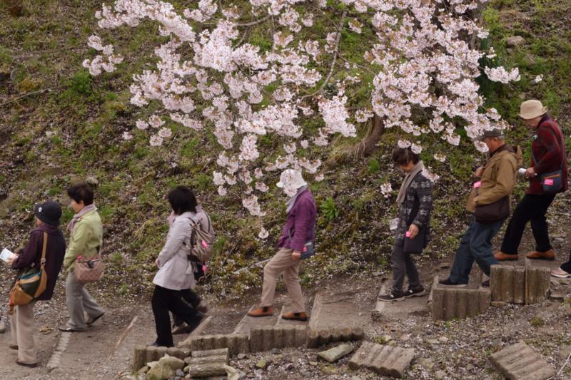 京都新聞写真コンテスト 花に誘われ
