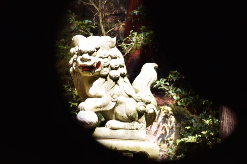 京都新聞写真コンテスト 守り神