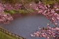 京都新聞写真コンテスト ピンクの湖面