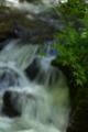 京都新聞写真コンテスト 新緑と滝