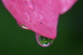 京都新聞写真コンテスト グリンの涙