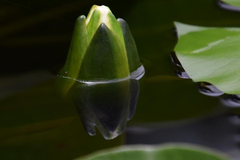 京都新聞写真コンテスト もうすぐ開花