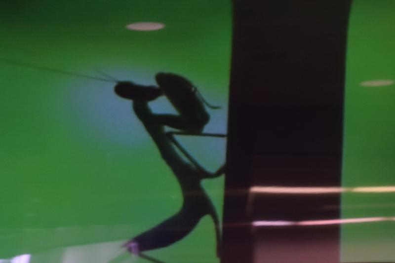 京都新聞写真コンテスト 窓越しのカマキリ