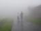 京都新聞写真コンテスト 霧に消えゆくカップル