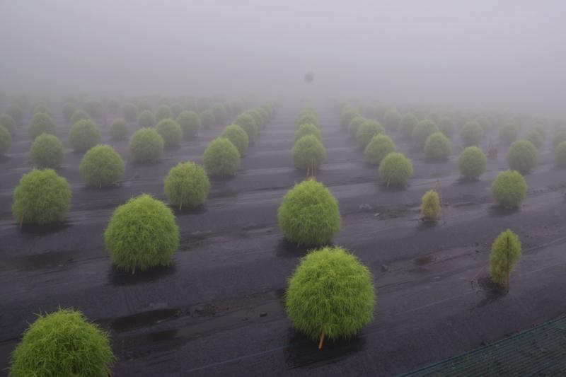 京都新聞写真コンテスト 霧の彼方に