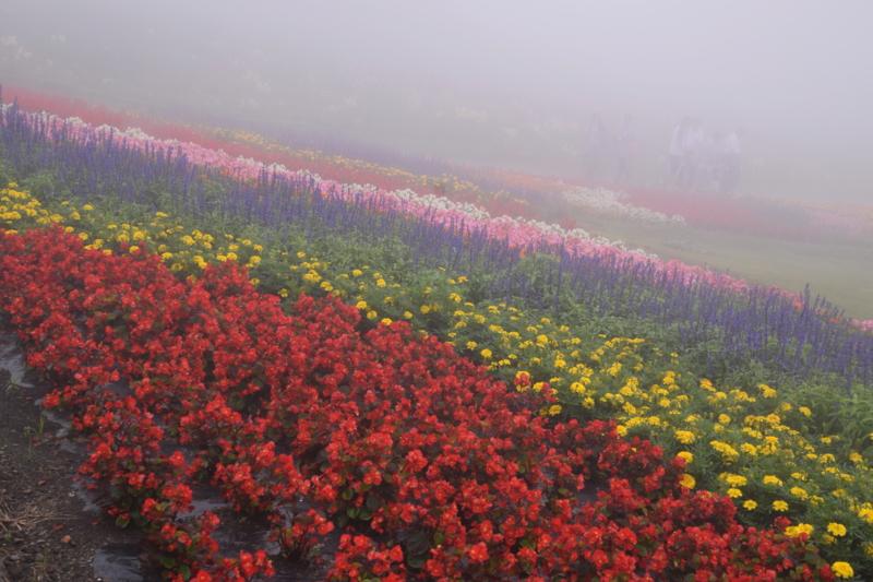 京都新聞写真コンテスト 天空の花園
