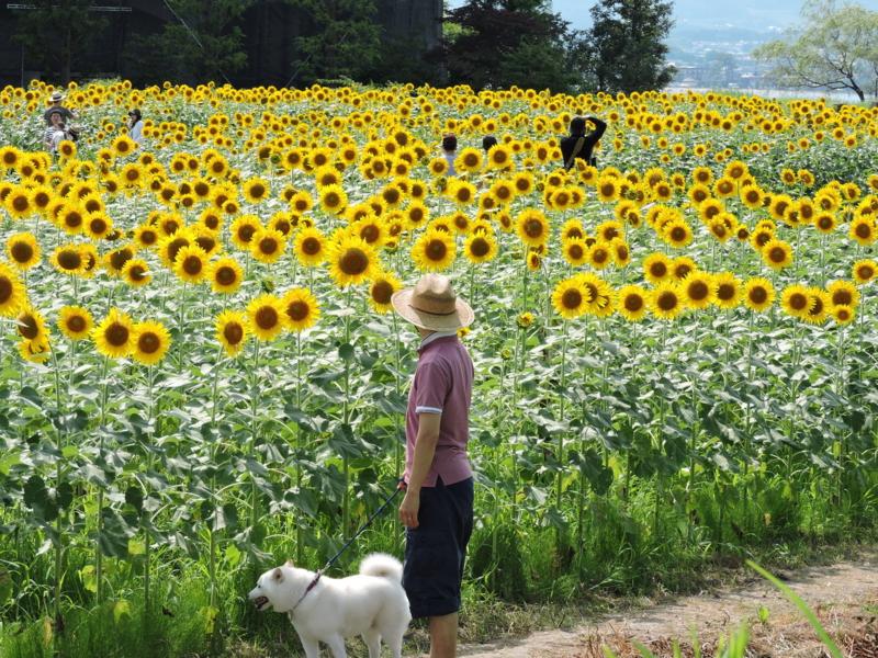 京都新聞写真コンテスト 犬も花見