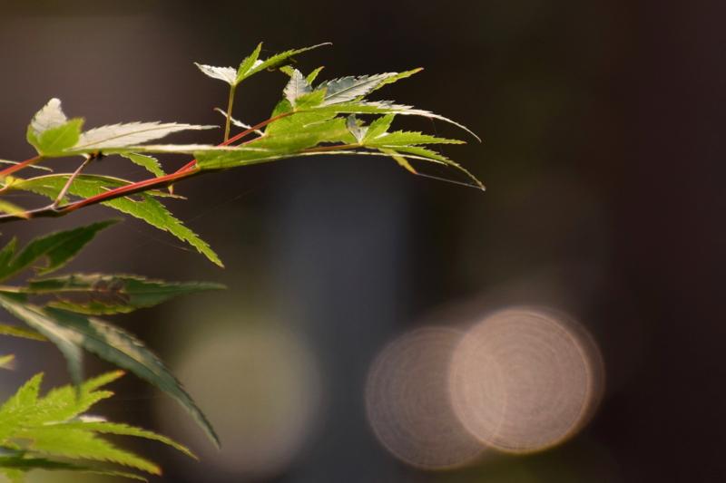 京都新聞写真コンテスト 緑と光