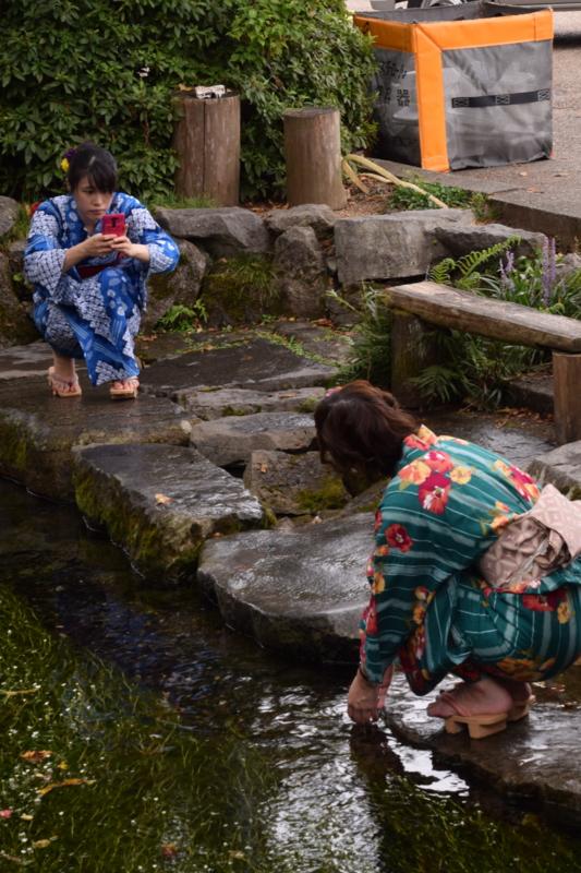京都新聞写真コンテスト 涼を求め