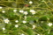 京都新聞写真コンテスト 楓と梅花藻