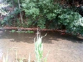 落合川、野鳥がたくさん