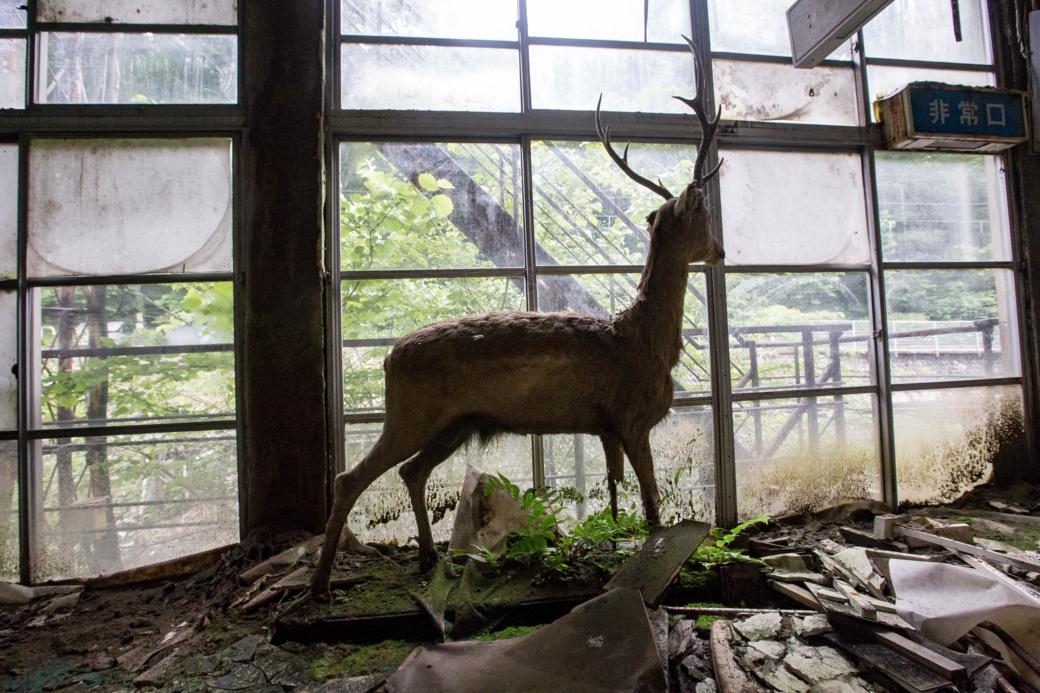 外を見つめる鹿