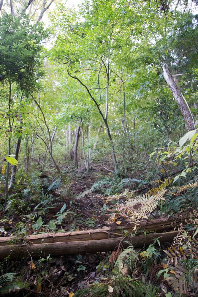 倒れた木と徐々に細くなっていく獣道