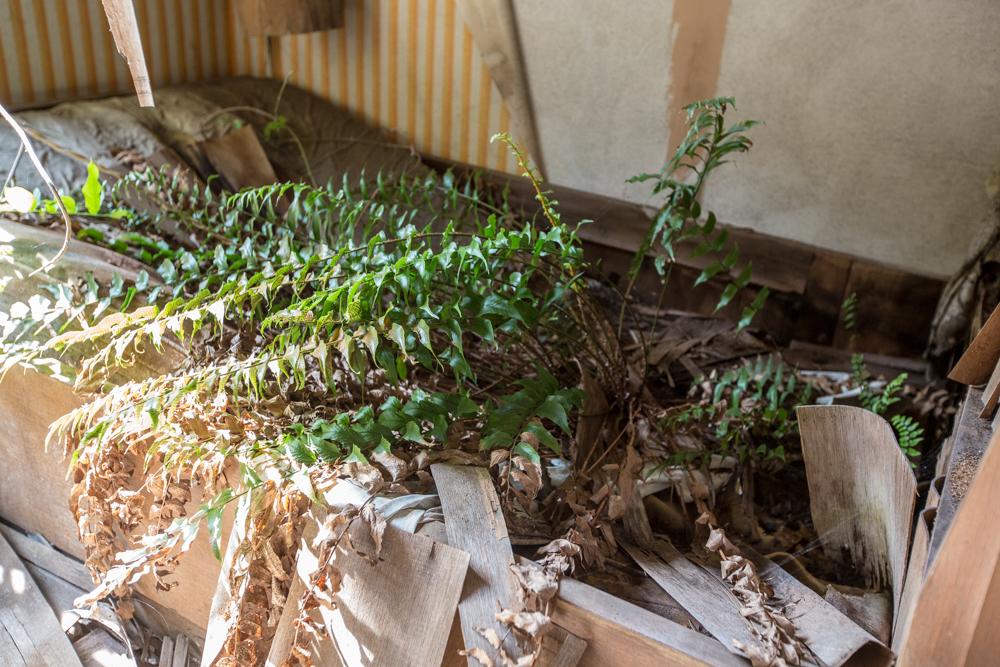 草の生えたベッド