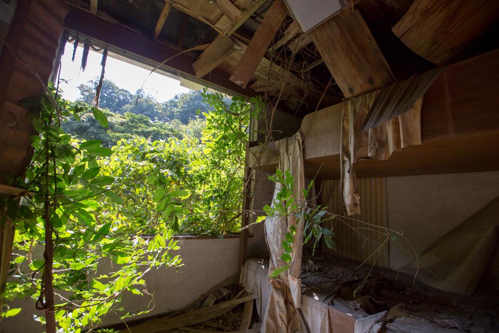 朽ちた天井と草木が生い茂る部屋