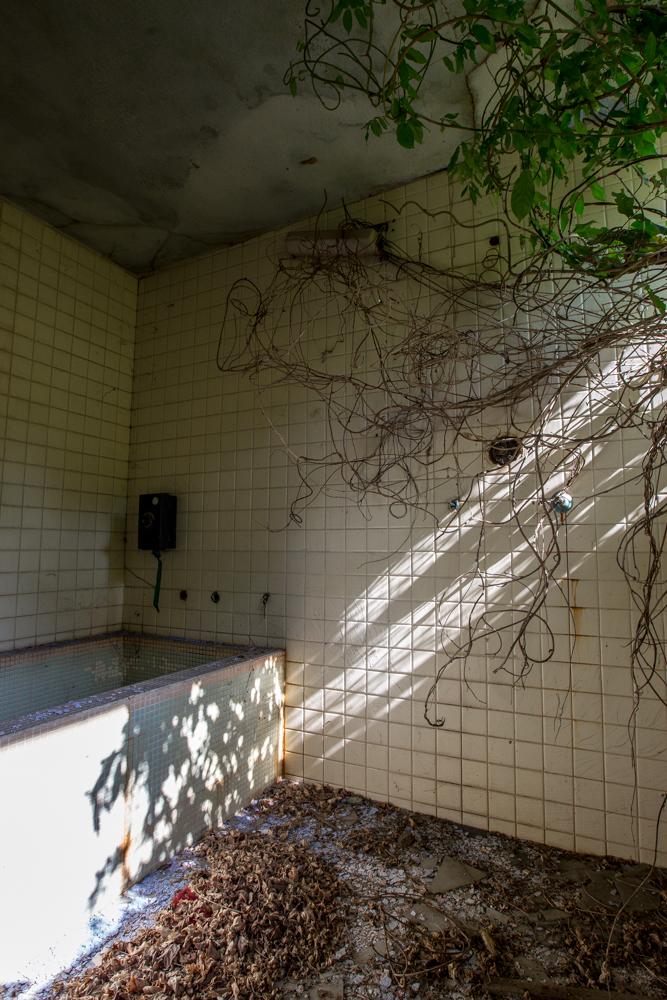 蔦が張ったバスルームの写真