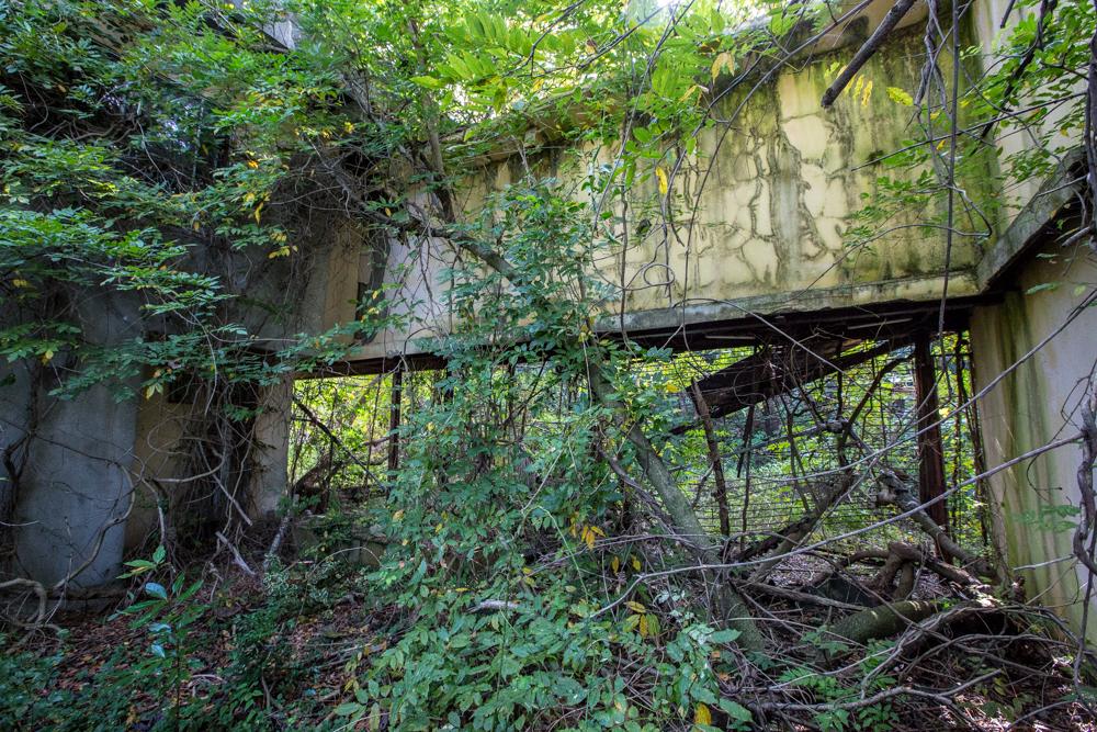 草木が絡みついた施設の残骸