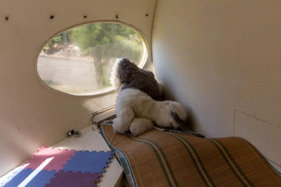 窓から外を覗く犬のぬいぐるみ
